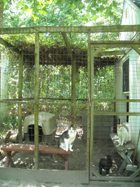 outdoor cat enclosure